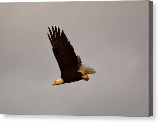 Meat Canvas Print - Fly Like An Eagle by Doug Grey