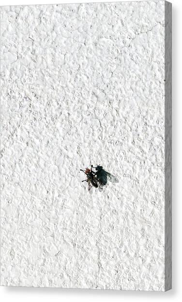 Gnats Canvas Print - Fly On A Wall by Alexander Senin