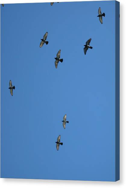 Fly Through The Sky's Ceiling Canvas Print
