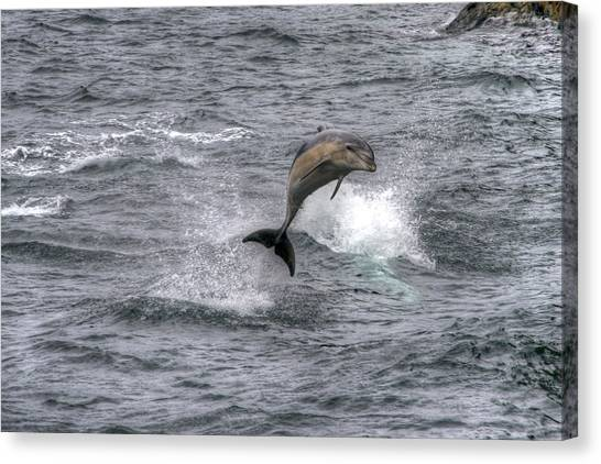 Flying Dolphin Canvas Print