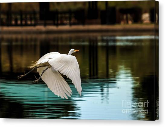 Sublime Canvas Print - Flying Egret by Robert Bales