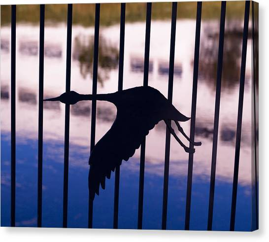 Flying Fence Canvas Print