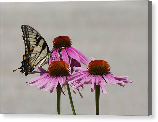 Flying Flower Canvas Print