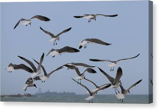 Flying Gulls  Canvas Print