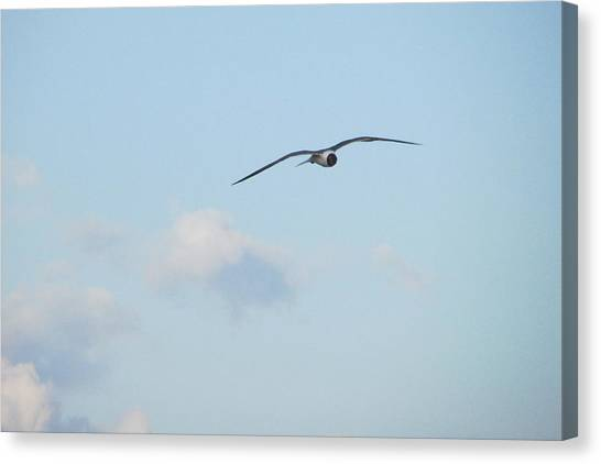 Flying High Canvas Print by Cheryl Smith