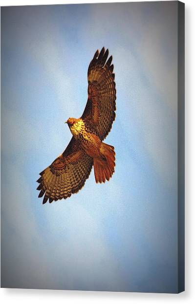 Flying High Canvas Print