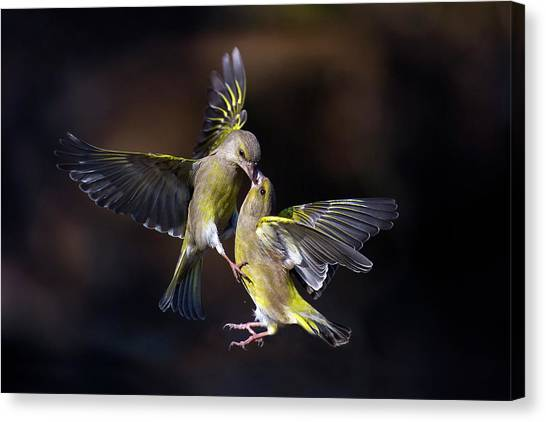 Fighting Canvas Print - Flying Kiss 11 by Marco Redaelli
