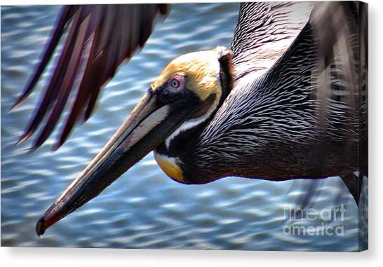 Flying Low 2 Canvas Print