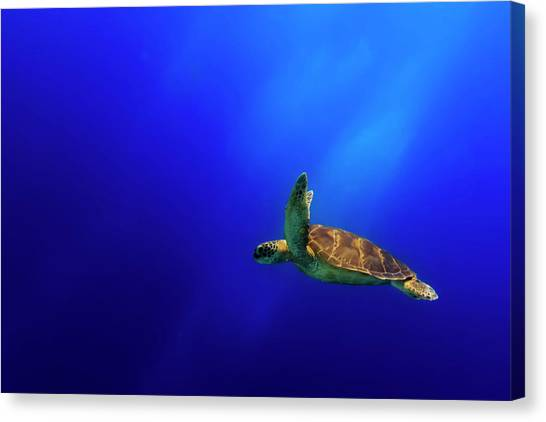 Turtles Canvas Print - Flying by Mato P.