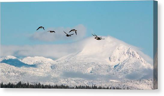 Flying North Canvas Print