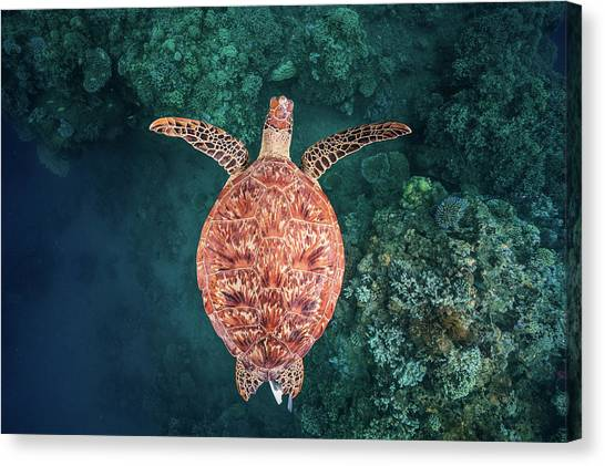 Coral Reefs Canvas Print - Flying Over The Reef by Barathieu Gabriel