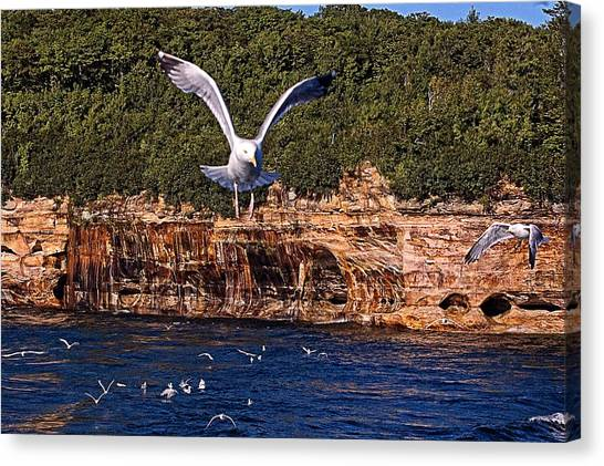 Flying Over The Rocks Canvas Print by Cheryl Cencich
