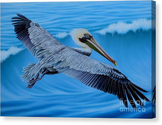 Flying Pelican Canvas Print