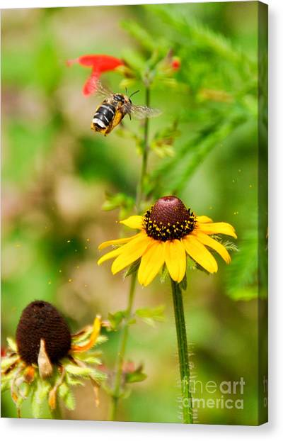 Flying Pollen Canvas Print