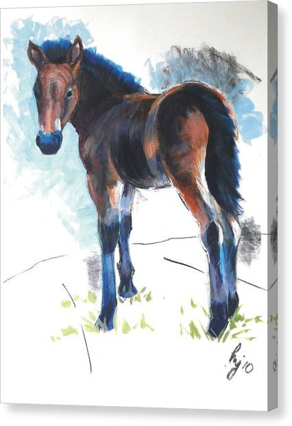 Foal Painting Canvas Print
