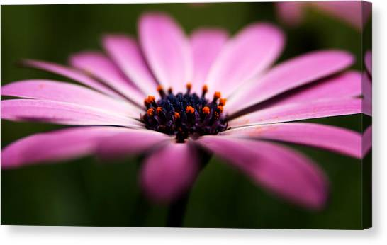 Focus On The Middle Canvas Print by Kim Lagerhem