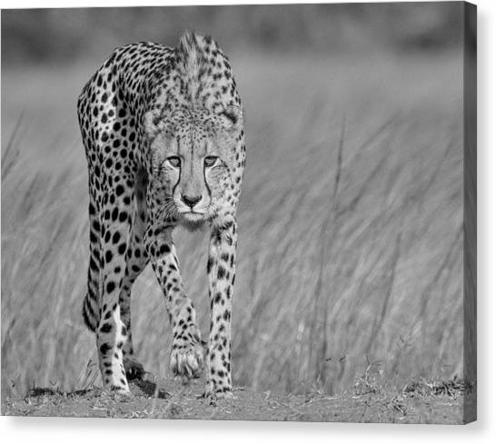 Camouflage Canvas Print - Focused Predator by Jaco Marx