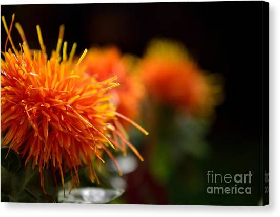 Canvas Print featuring the photograph Focused Safflower by Scott Lyons