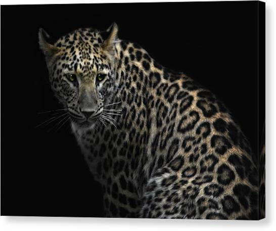 Panthers Canvas Print - Focussing The Prey by Joachim G Pinkawa