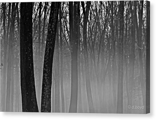 Fog In The Dark Forest Canvas Print