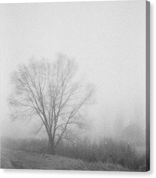 Foggy Forests Canvas Print - #fog by Kelly Hasenoehrl