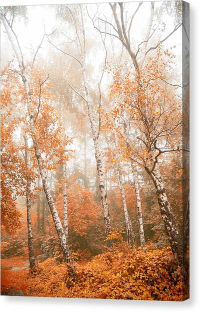 Foggy Autumn Aspens Canvas Print