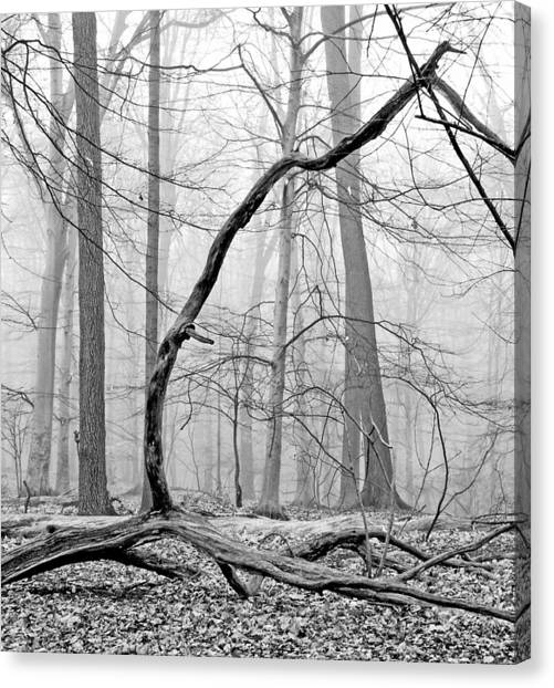 Foggy Morning Deciduous Forest Canvas Print