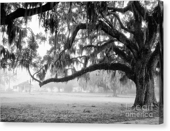 Foggy Morning On Coosaw Plantation Canvas Print