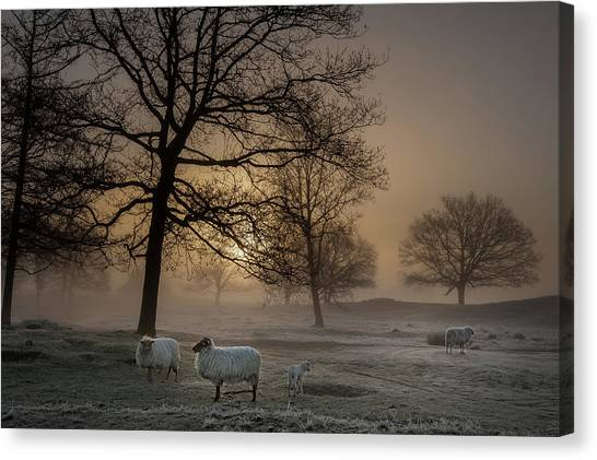Farm Landscape Canvas Print - Foggy Morning by Piet Haaksma