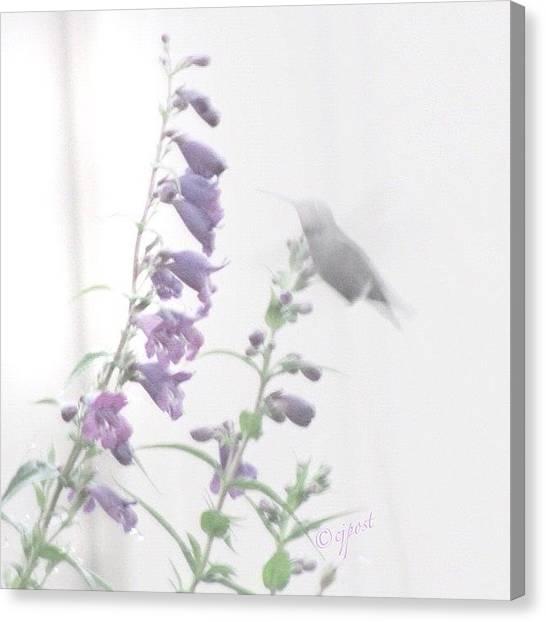 Hummingbirds Canvas Print - Foggy Morning Visitor by Cynthia Post