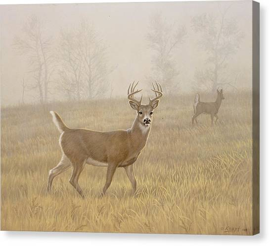 Niagra Falls Canvas Print - Foggy Morning-whitetail by Paul Krapf