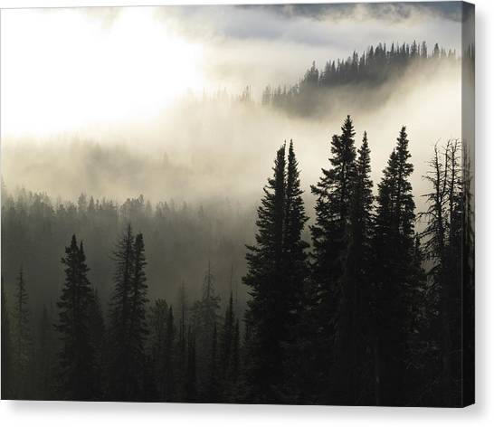 Foggy Sunrise At Yellowstone Canvas Print