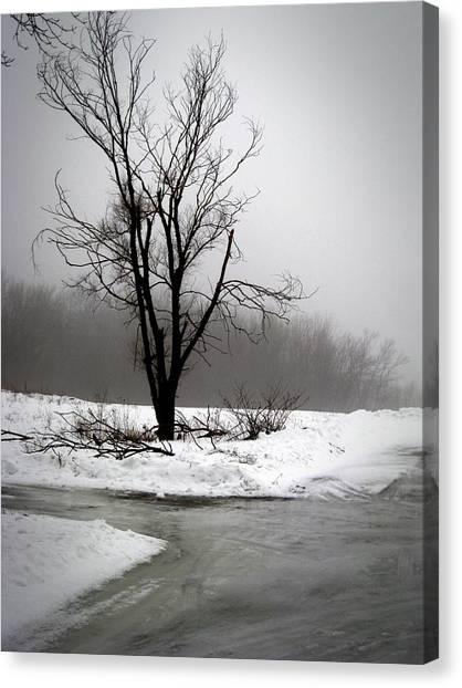 Foggy Tree Canvas Print