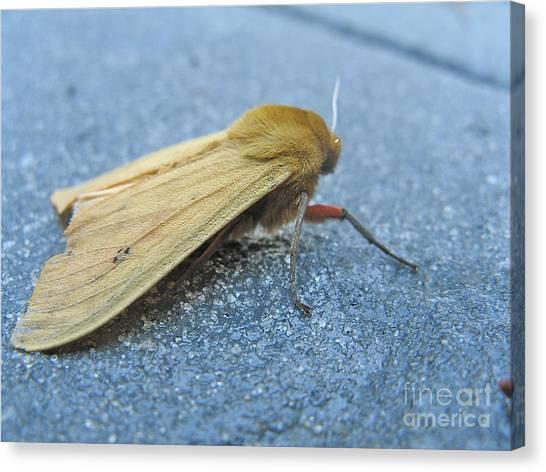 Fokker Moth Canvas Print