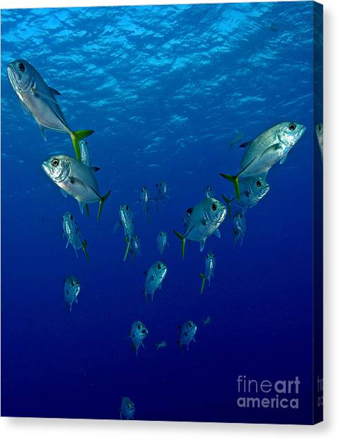 Puffer Canvas Print - Follow Jack by Carey Chen