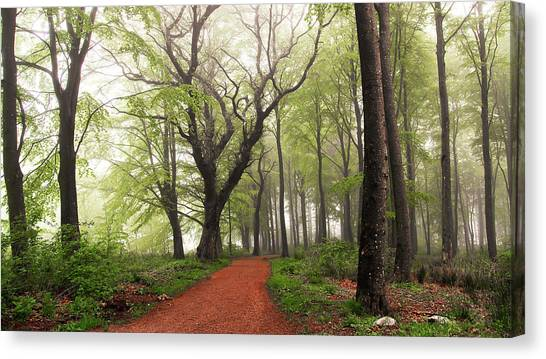 Forest Paths Canvas Print - Follow The Red Path. by Leif L?ndal