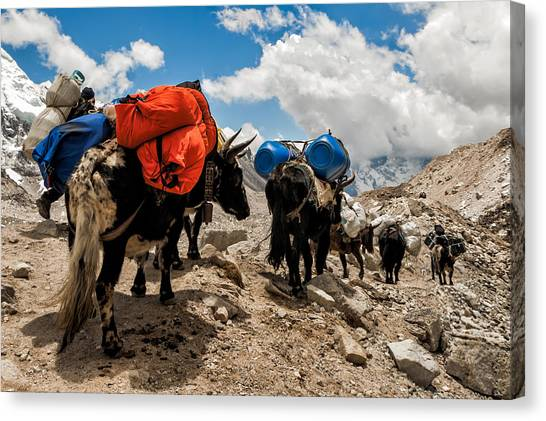 Mount Everest Canvas Print - Follow The Yaks by Kristin Lau
