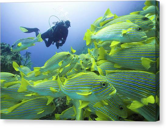 Scuba Diving Canvas Print - Following The Mainstream by Marcel Rebro