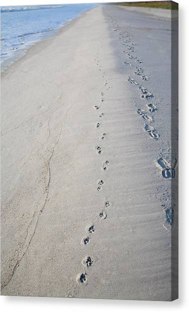 Footprints And Pawprints Canvas Print