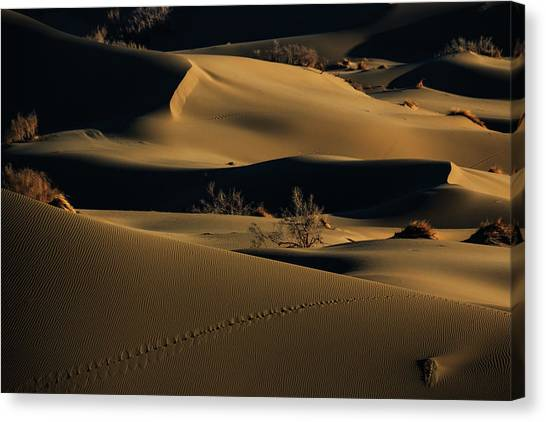 Bush Canvas Print - Footprints by Babak Mehrafshar (bob)