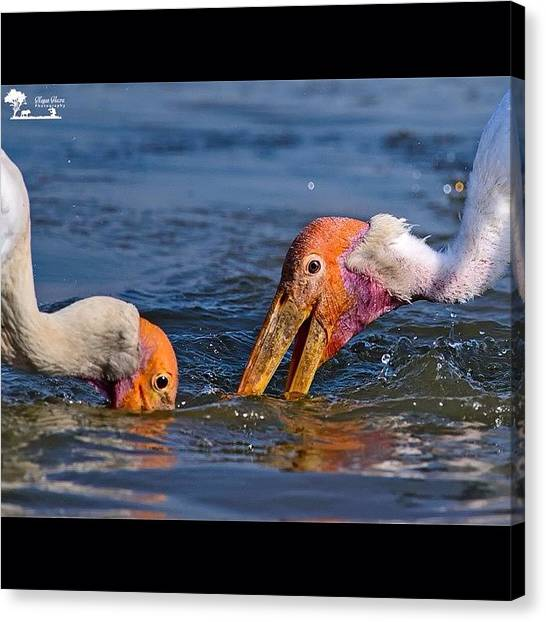 Storks Canvas Print - For The Same Fish  Painted Stork by Nayan Hazra