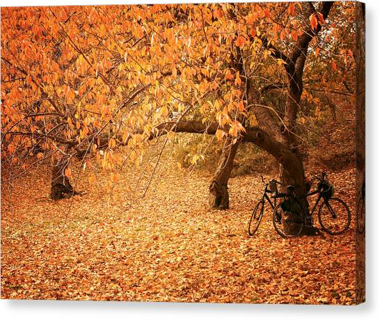 Falling Leaf Canvas Print - For Two - Autumn - Central Park by Vivienne Gucwa