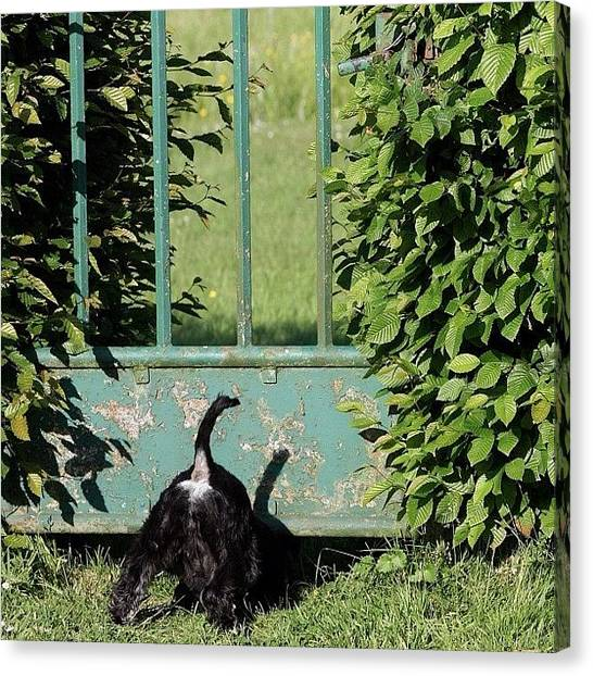 Outbreak Canvas Print - Forbidden. - #dogs #animals #pets #pet by Manuela Kohl