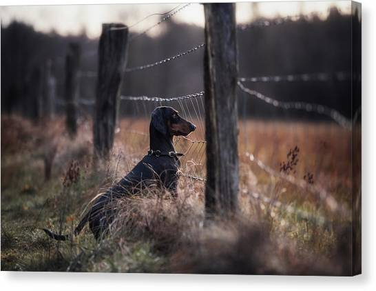 Dachshunds Canvas Print - Forbidden Fruits... by Heike Willers
