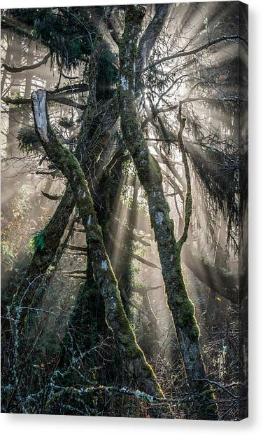 Forest Beams Canvas Print by Mike  Walker