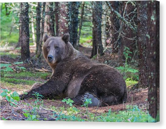 Forest Bear Canvas Print