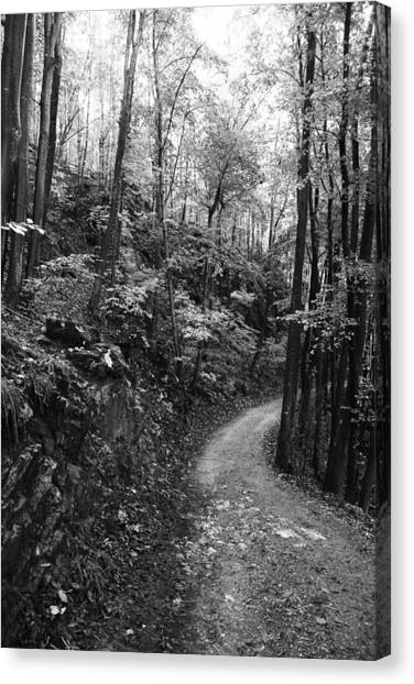 Forest Black And White 12 Canvas Print by Falko Follert