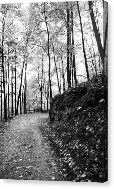 Forest Black And White 6 Canvas Print by Falko Follert