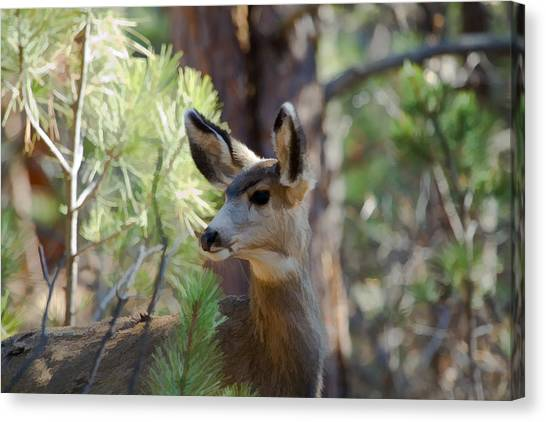 Forest Doe Canvas Print