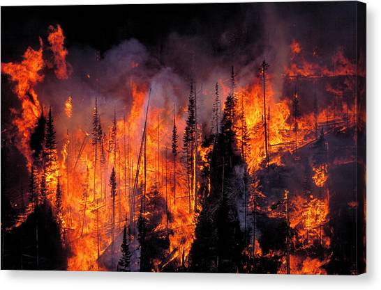 Forest Fire Canvas Print by Kari Greer/science Photo Library